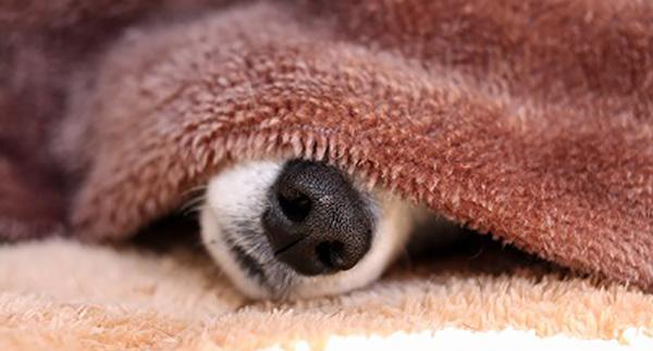寒がりの犬
